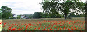 """coquelicot panorama"" (69626 octets)"